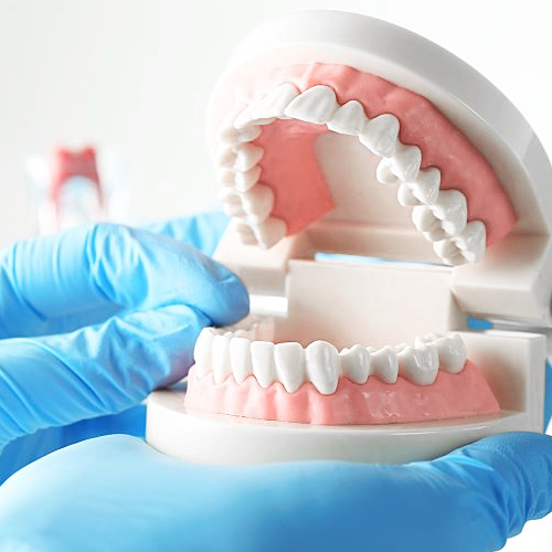 dentistry pic of fake teeth model